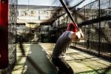The Easton Beast Speed Youth Baseball Bat